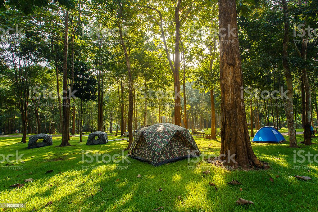 Tourist tent in forest camp among meadow stock photo