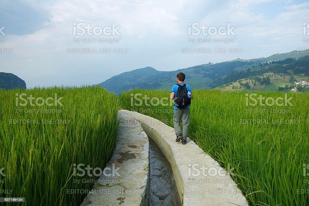 Tourist walking along the rice paddies in Yuanyang stock photo