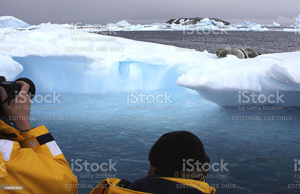 Tourists and Antarctica Wild Life stock photo