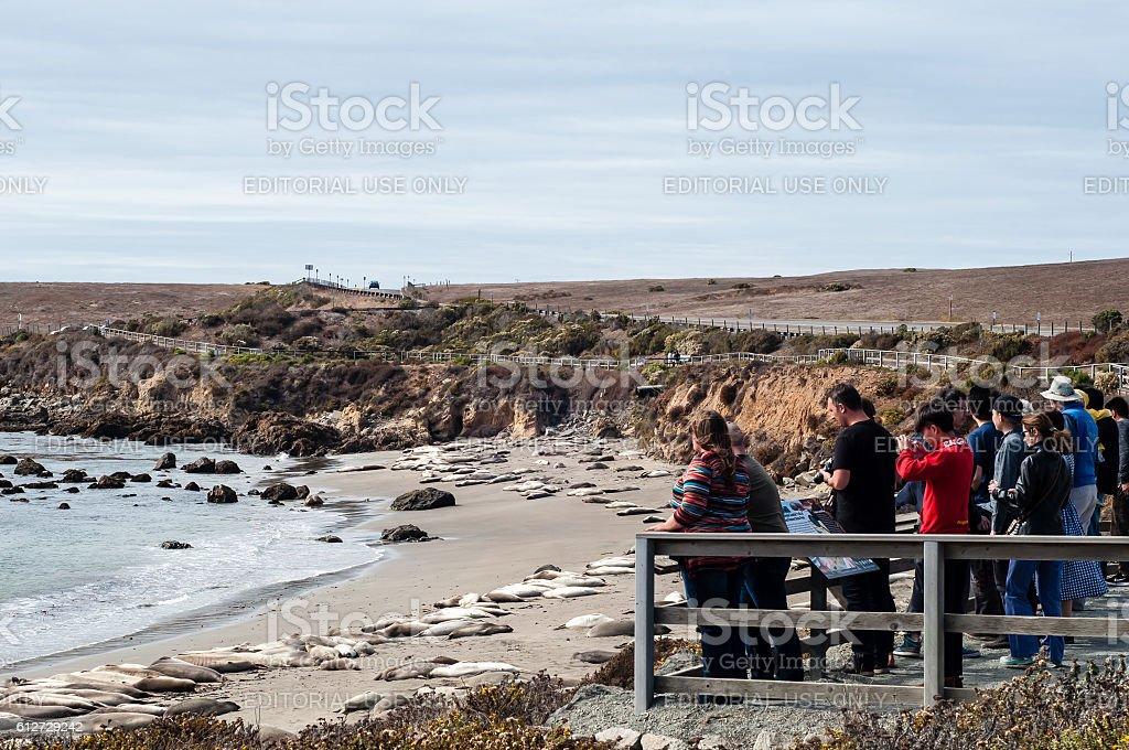 Tourists and Elephant Seals stock photo