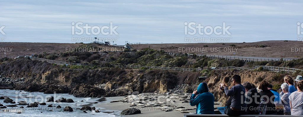 Tourists at the  Elephant Seal Rookery stock photo