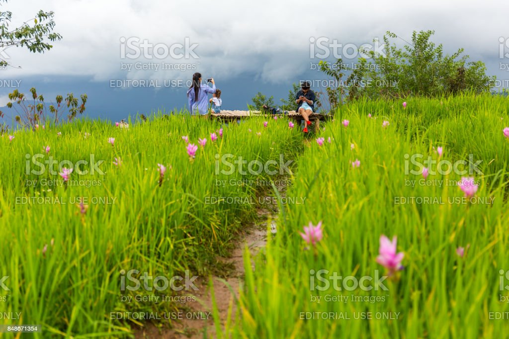 Tourists at the Mon Chaem mountain flower garden in Chiang Mai, Thailand stock photo