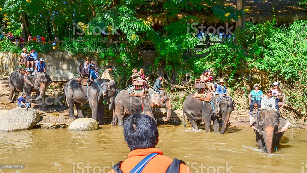 Tourists crossing a Thailand river riding on elephant backs stock photo