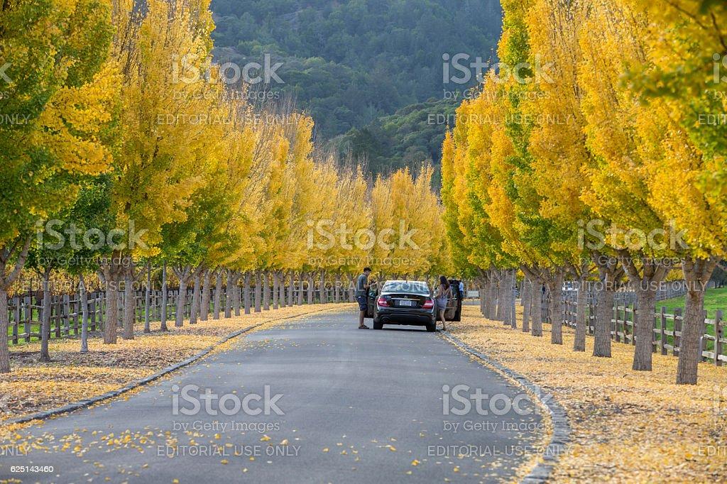 Tourists enjoy the Autumn at Napa Valley, California stock photo