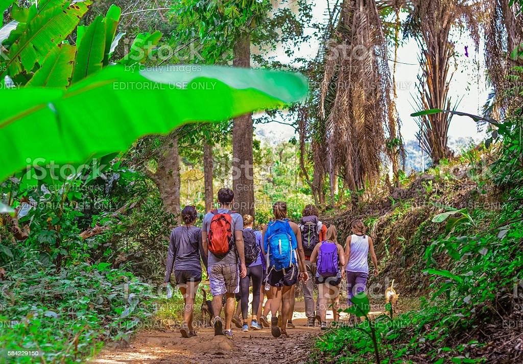 Tourists hiking in the deep jungle stock photo