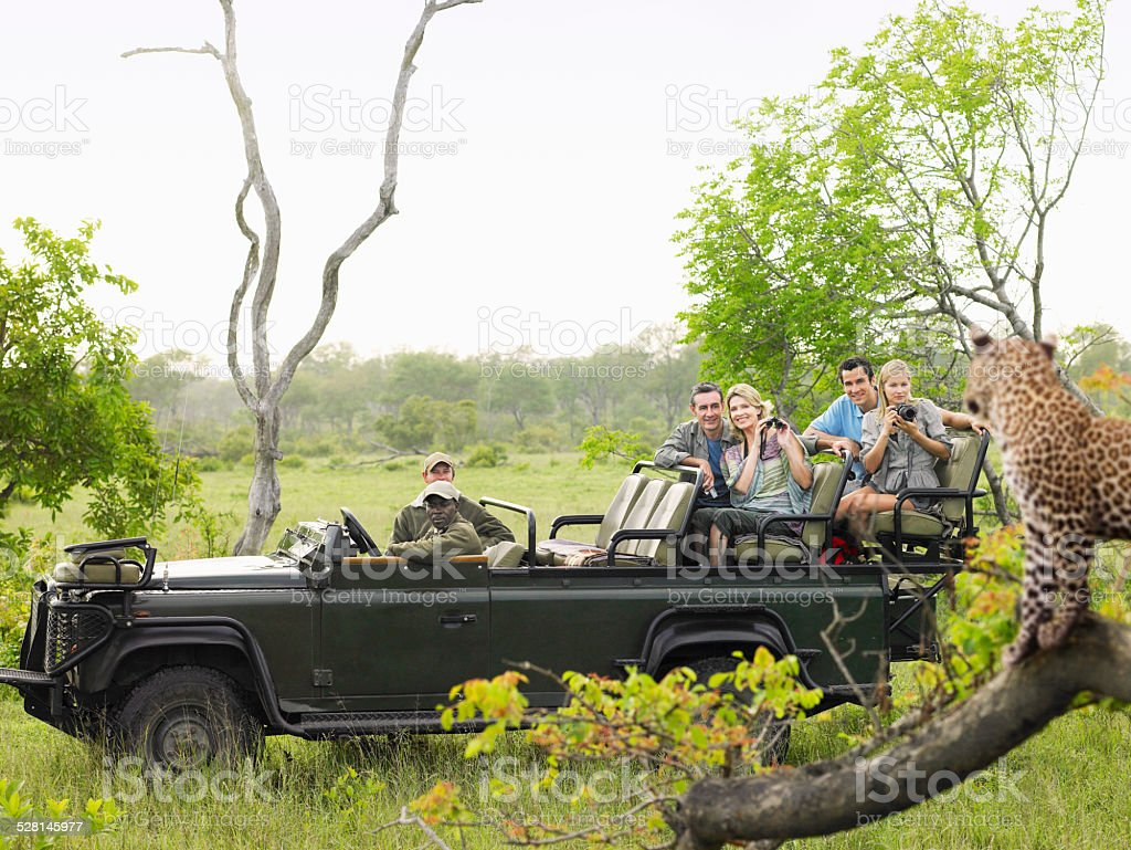 Tourists In Jeep Looking At Cheetah On Log stock photo