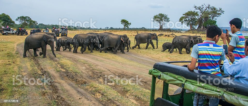 Tourists in safari jeeps in Minneriya, Sri Lanka stock photo