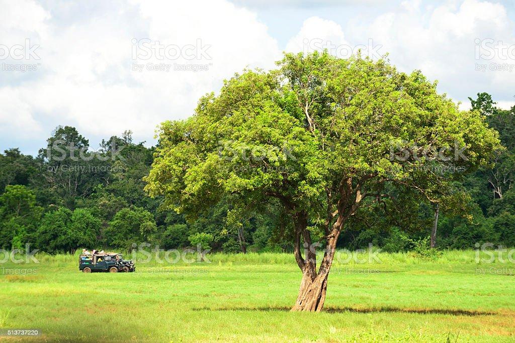 Tourists in safari jeeps, Minneriya, Sri Lanka stock photo
