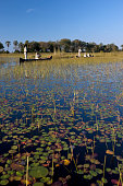 Tourists - Okavango Delta - Botswana