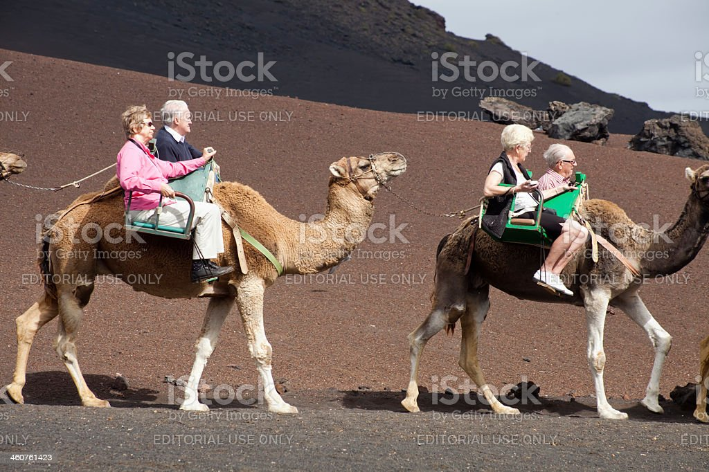 Tourists on dromedary stock photo