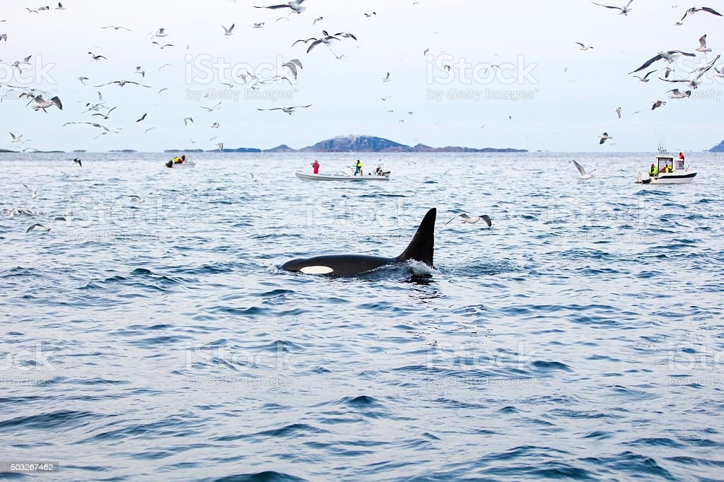 Tourists on whale safari boats in the arctic stock photo