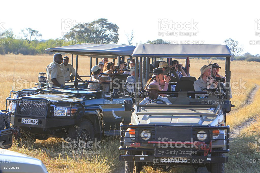 Tourists photographing Lions in Savuti, Chobe National Park, Botswana stock photo