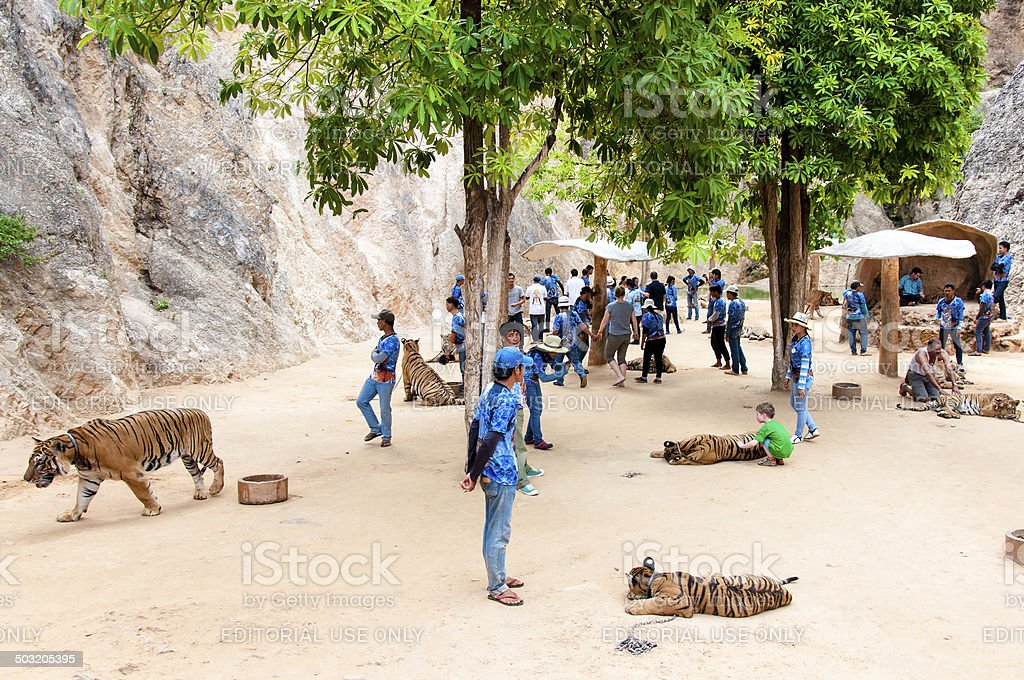 Tourists posing with tigers at the Tiger Temple in Thailand stock photo
