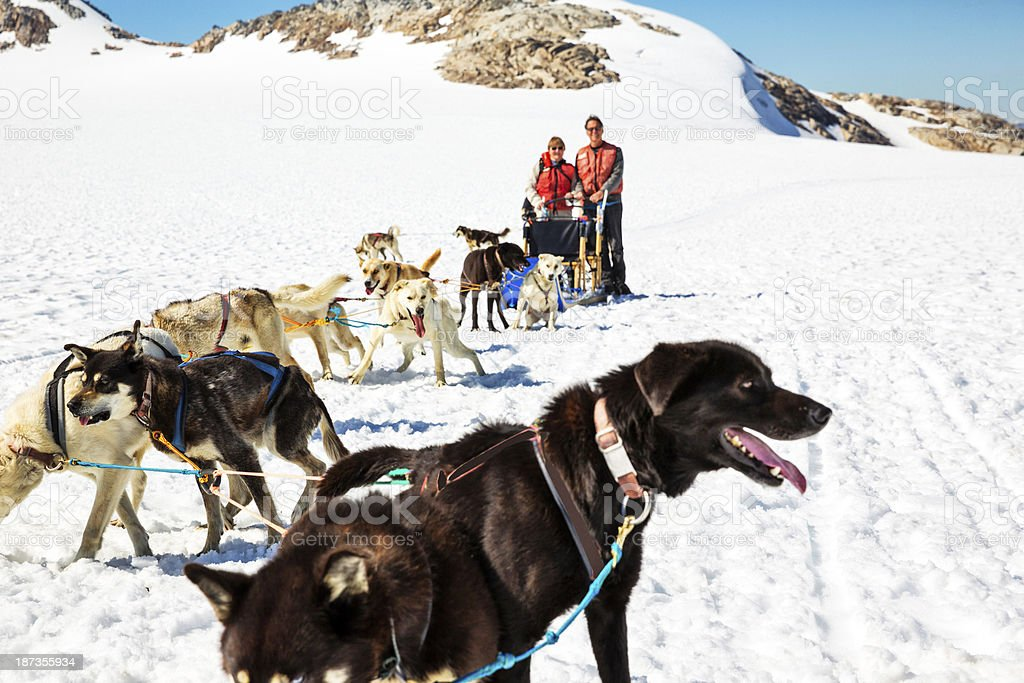 Tourists standing behind a dog sled in Alaska stock photo