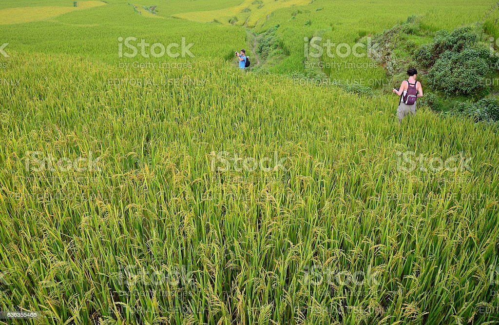 Tourists walk along the rice paddies in Yuanyang stock photo