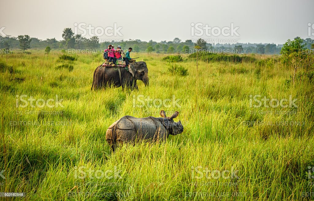 Tourists watching a rhino from an elephant in Nepal stock photo