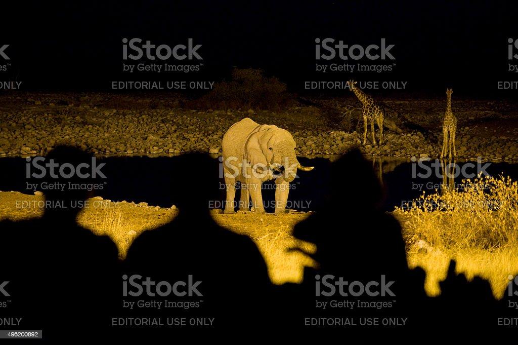 Tourists watching elephant and giraffes at Okaukuejo, Etosha stock photo