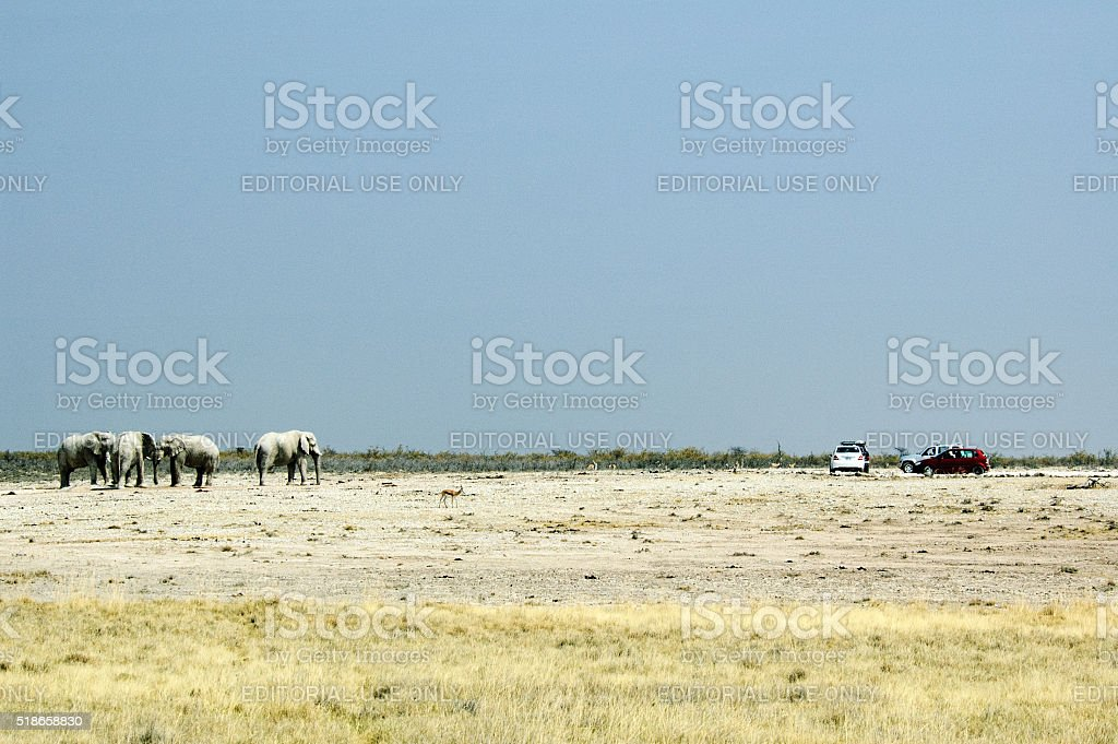 Tourists watching Elephants in Etosha stock photo