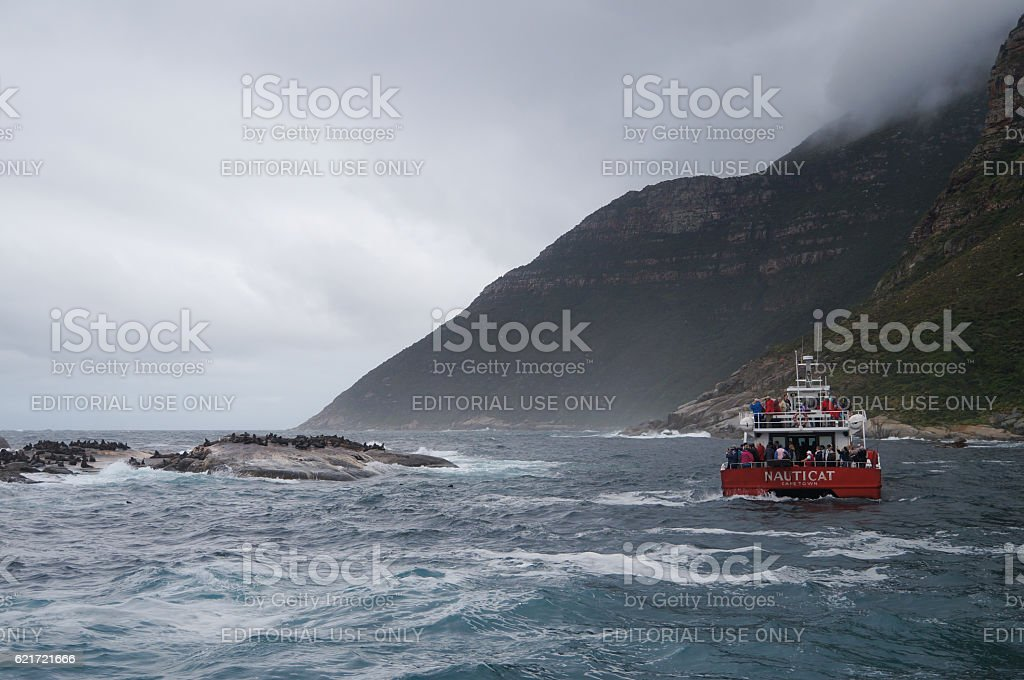 Tourists watching seal at Duiker Island,South Africa. stock photo