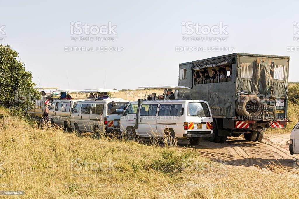 tourists watching wild life with safari cars royalty-free stock photo