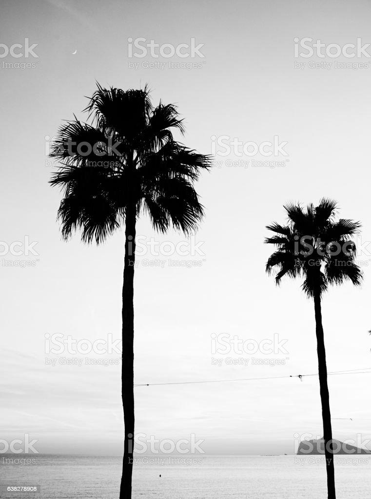 Tow Black Palm Tree stock photo