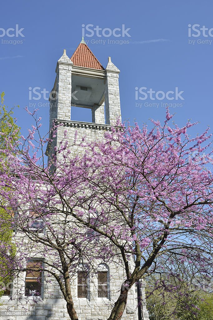 Tower and Flowering Tree royalty-free stock photo