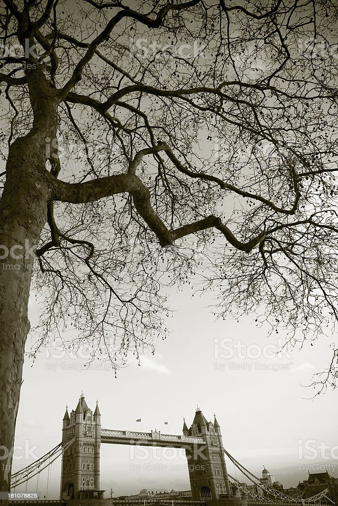 Tower Bridge and tree royalty-free stock photo