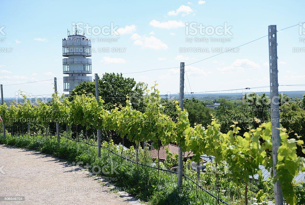 Tower Friedensturm of Brandenburg an der Havel with vineyard stock photo