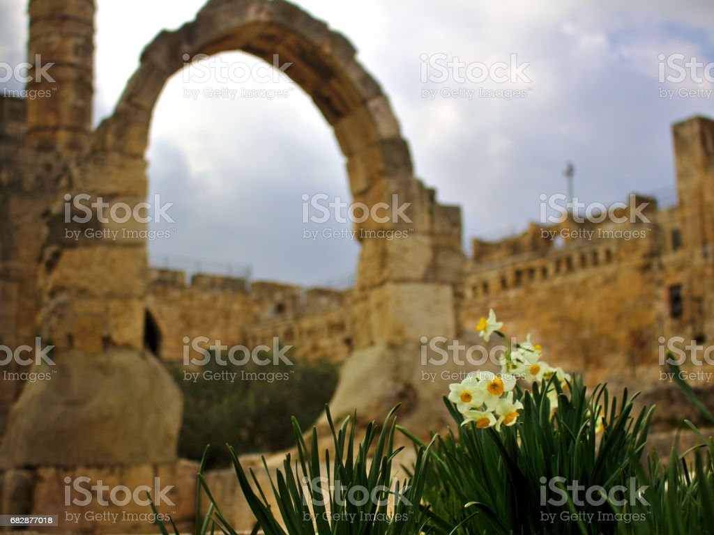 Tower of david arch with narcissus stock photo