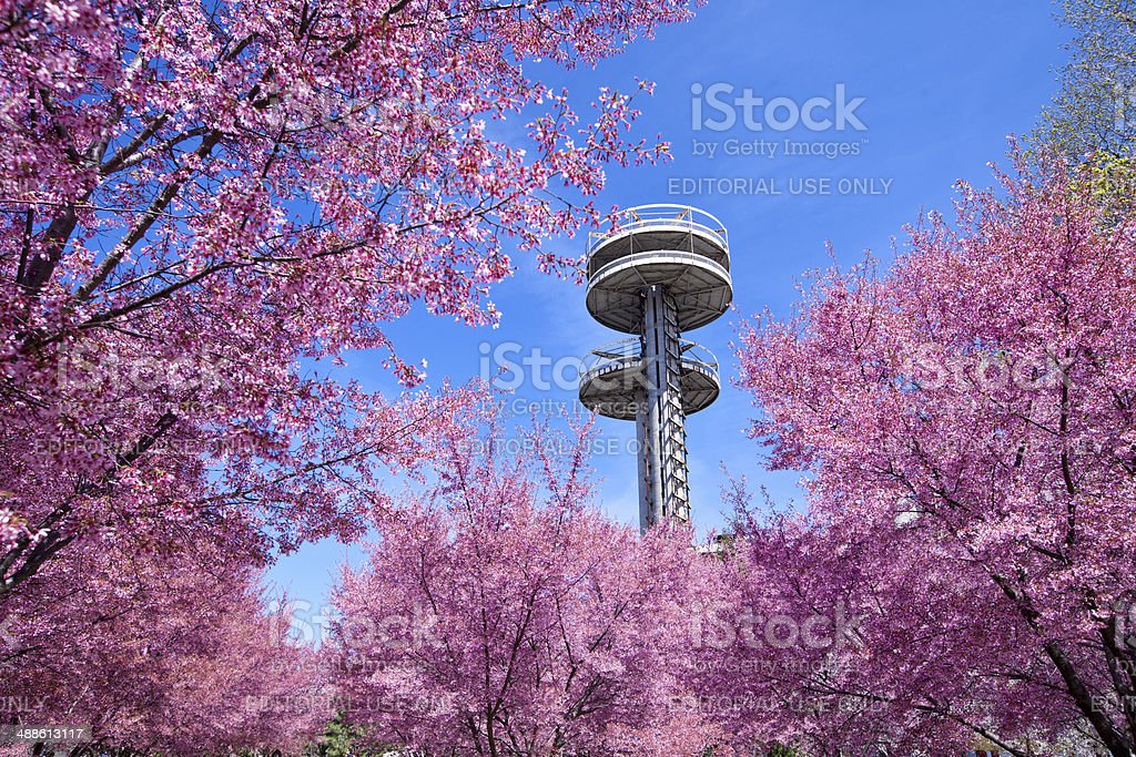 Towers of New York State Pavilion with cherry blossom tree. stock photo