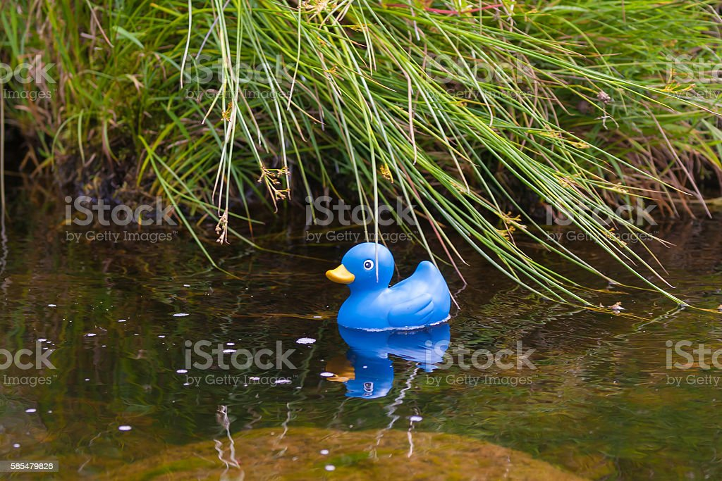 toy duck on a pond stock photo