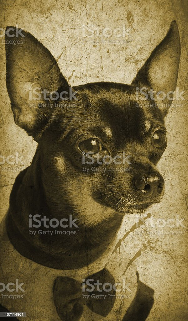 Toy terrier dog - vintage photo royalty-free stock photo