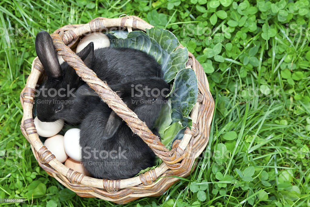 trabbits in a basket royalty-free stock photo