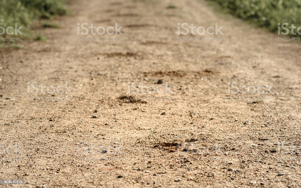trace hoof of the horse on sandy road in woods stock photo