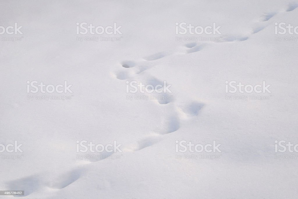 Traces in the snow stock photo
