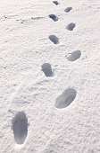 Traces in the snow / winter background with fresh footprint