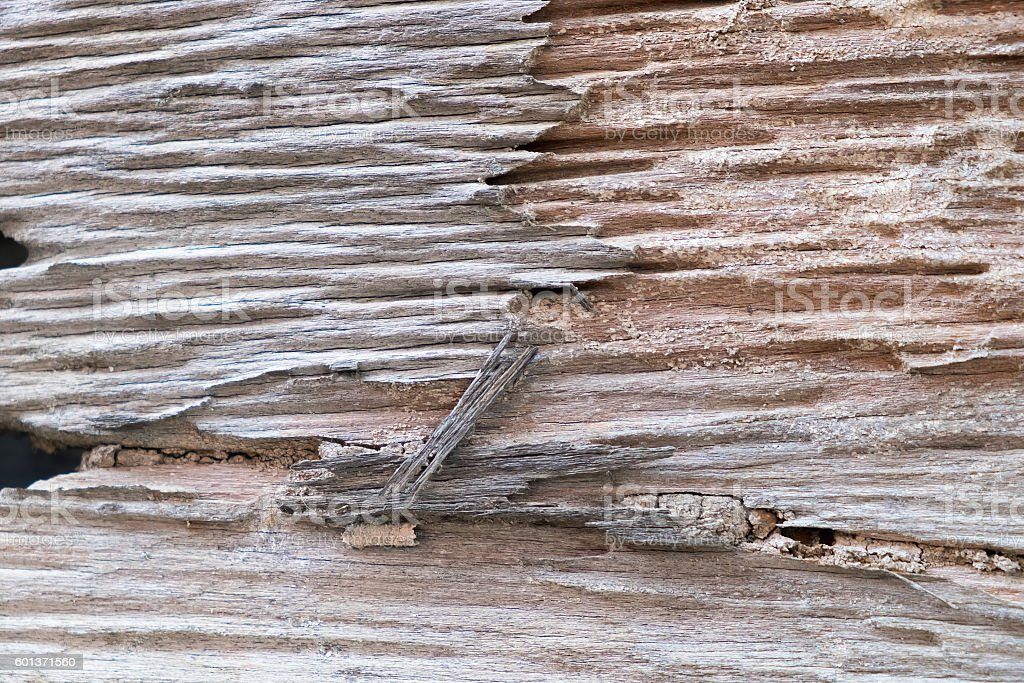Traces of termites eat wood stock photo