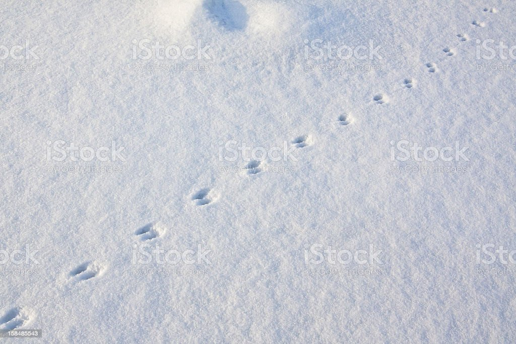Traces royalty-free stock photo