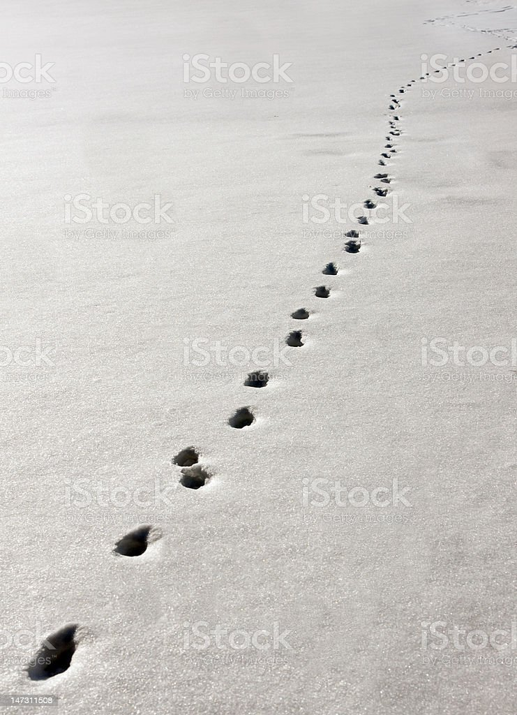 Track in snow royalty-free stock photo