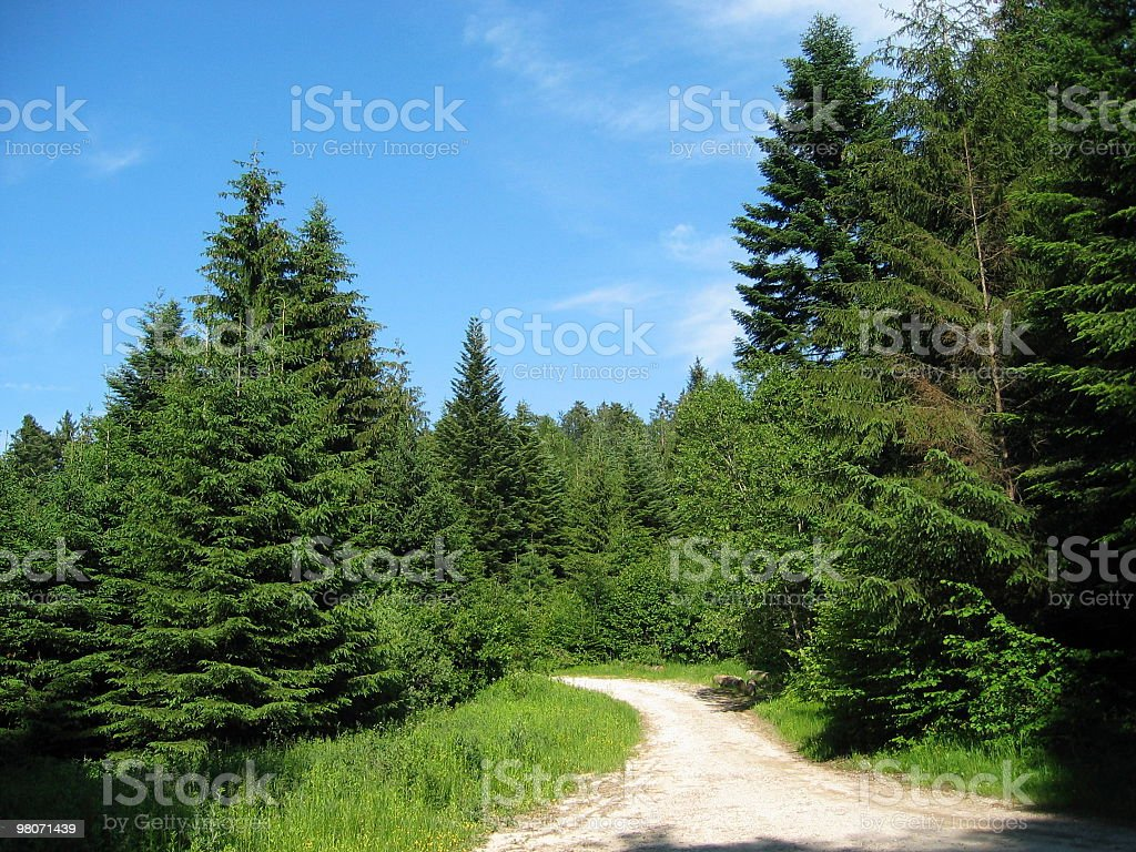 track in the trees royalty-free stock photo