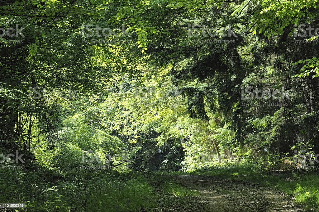 Track leading to an illuminated clearing in dense, mixed, wood royalty-free stock photo