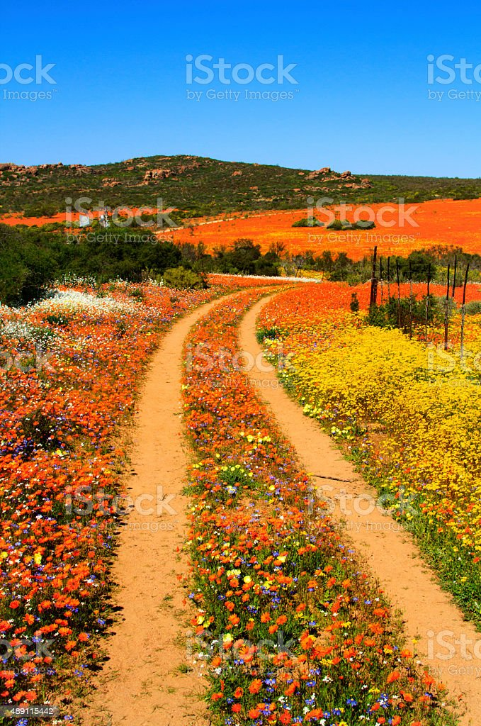 Track through the blooming flowers stock photo
