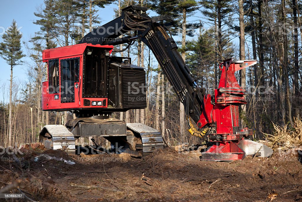 Tracked Feller Buncher for harvesting logs stock photo