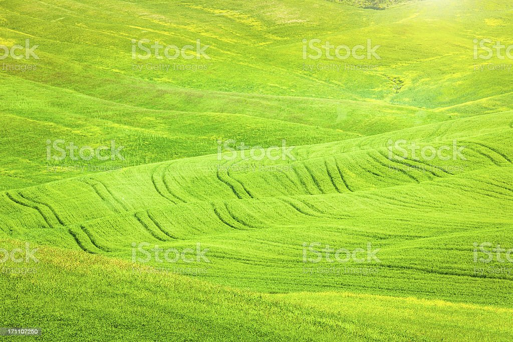 Tracks and Green Hills in Tuscany, Val d'Orcia royalty-free stock photo