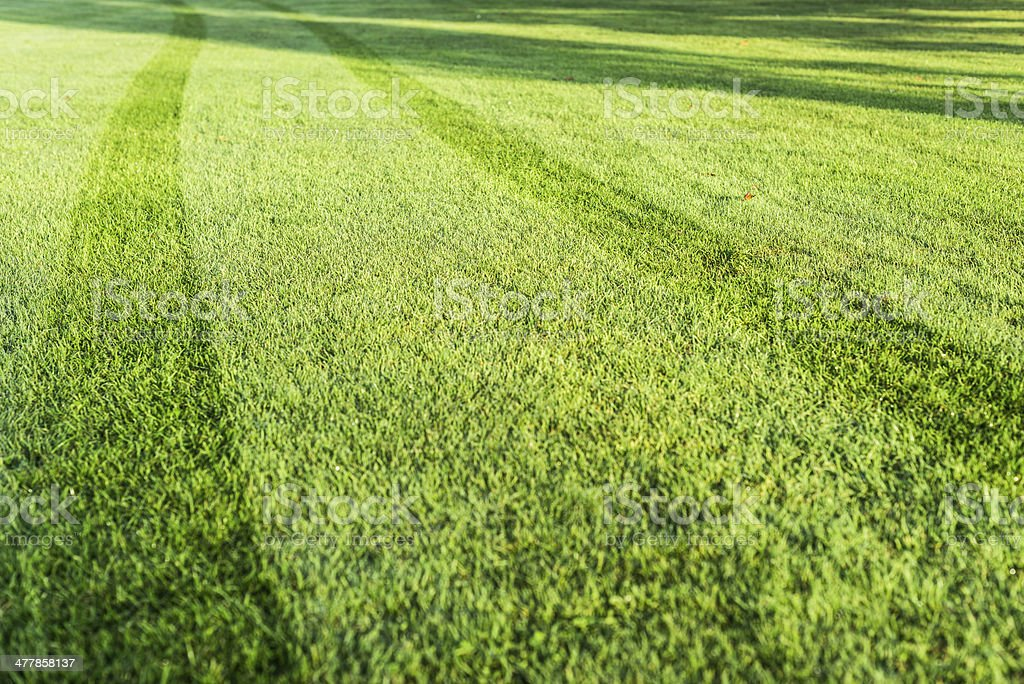 tracks from lawn-mower on freshly mowed lawn with dew stock photo