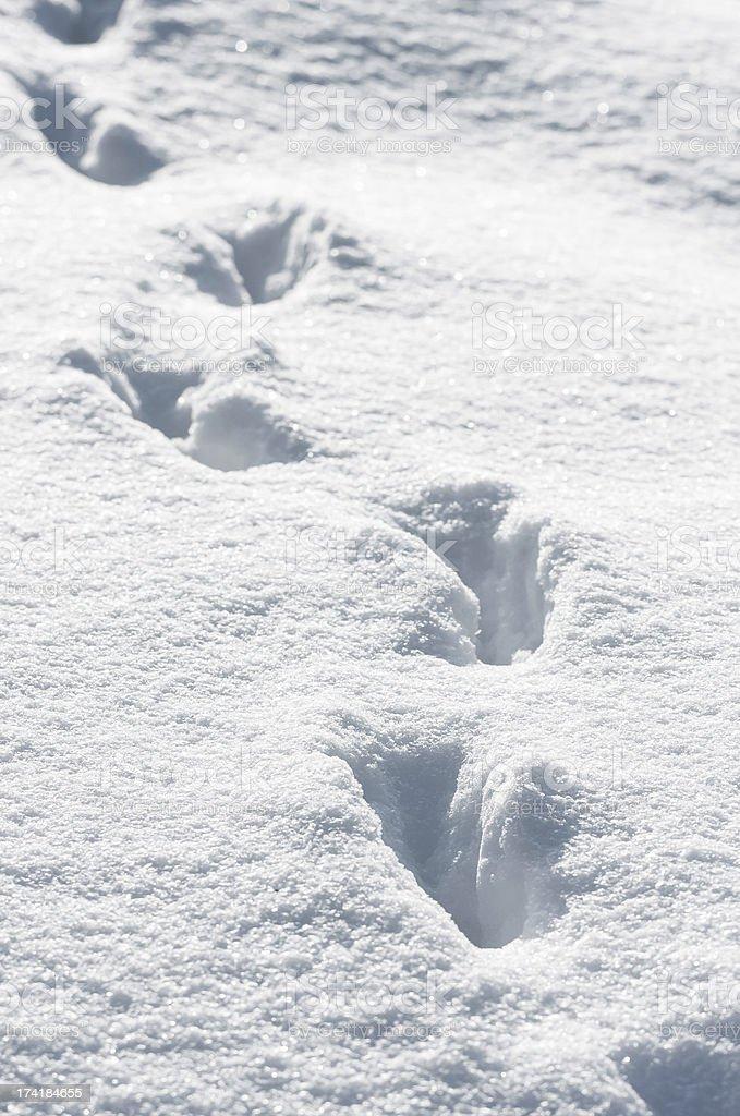 Tracks in deep snow stock photo