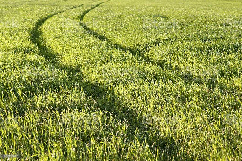 Tracks in Field royalty-free stock photo