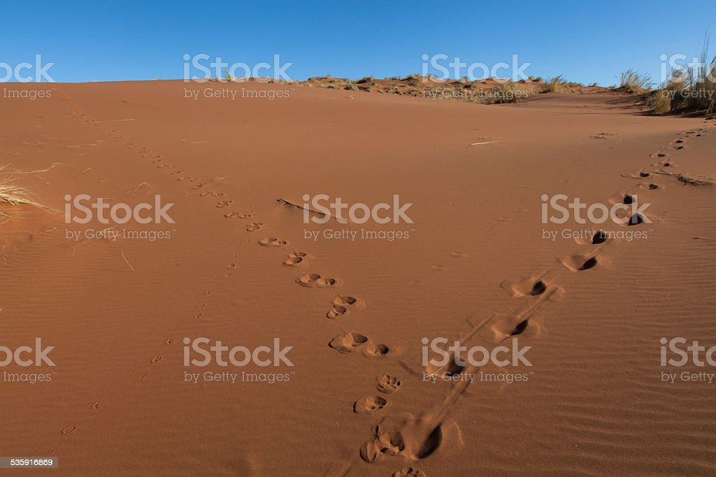 tracks in the desert stock photo