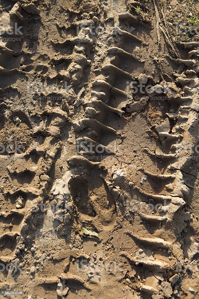 Tracks in the mud stock photo