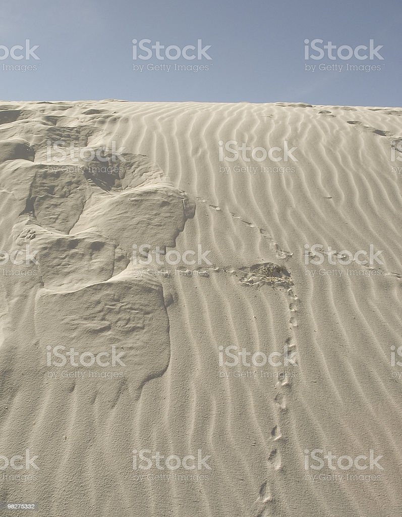 Tracks On White Sands royalty-free stock photo